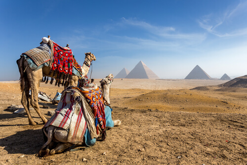 egypt pyramids of giza camels